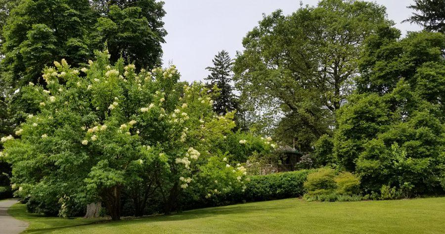 TREES 1200